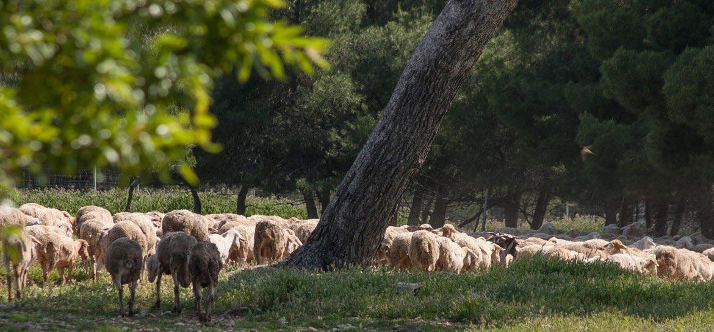 Naturaleza en Bullas